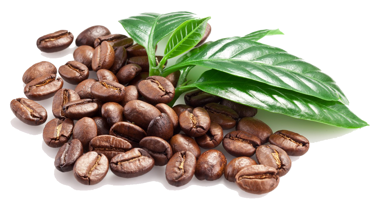 Coffee Beans Png Image Robusta Coffee